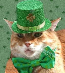 st patricks day cat