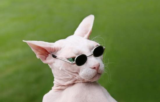 cat-sunglasses