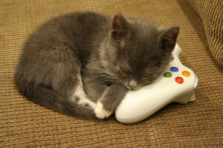 gaming cat