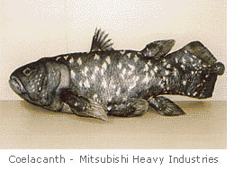Coelacanth-Mitsubishi