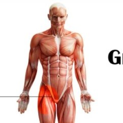 Lymph Nodes In Groin Location Diagram Goodman Package Heat Pump Wiring The Gallery For --> Male Pain
