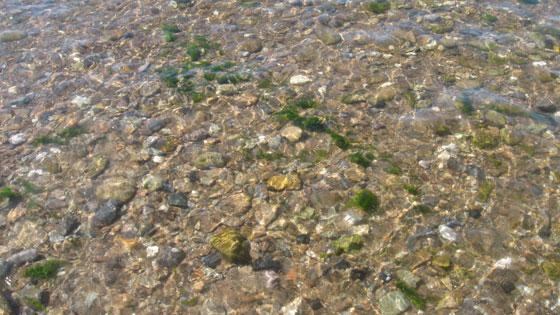 robzlog Ilfacombe - clear water off Larkstone Beach © Robert Zarywacz 2008