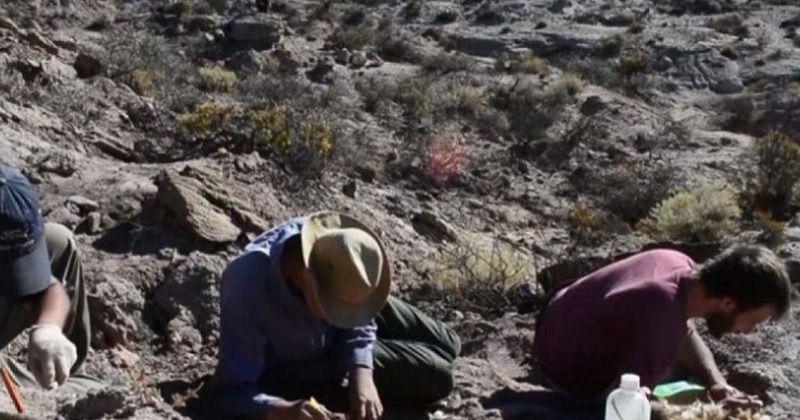 """Hallaron restos de un dinosaurio cerca de Roca: """"No era demasiado grande, pero seguramente era feroz"""""""