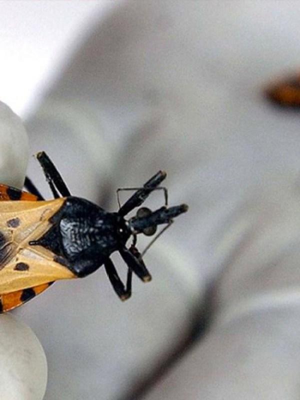 Preocupación mundial por el aumento de personas infestadas por el Mal de Chagas y poco o nada se informa que la infestación en grado importante se genera por el consumo de alimentos