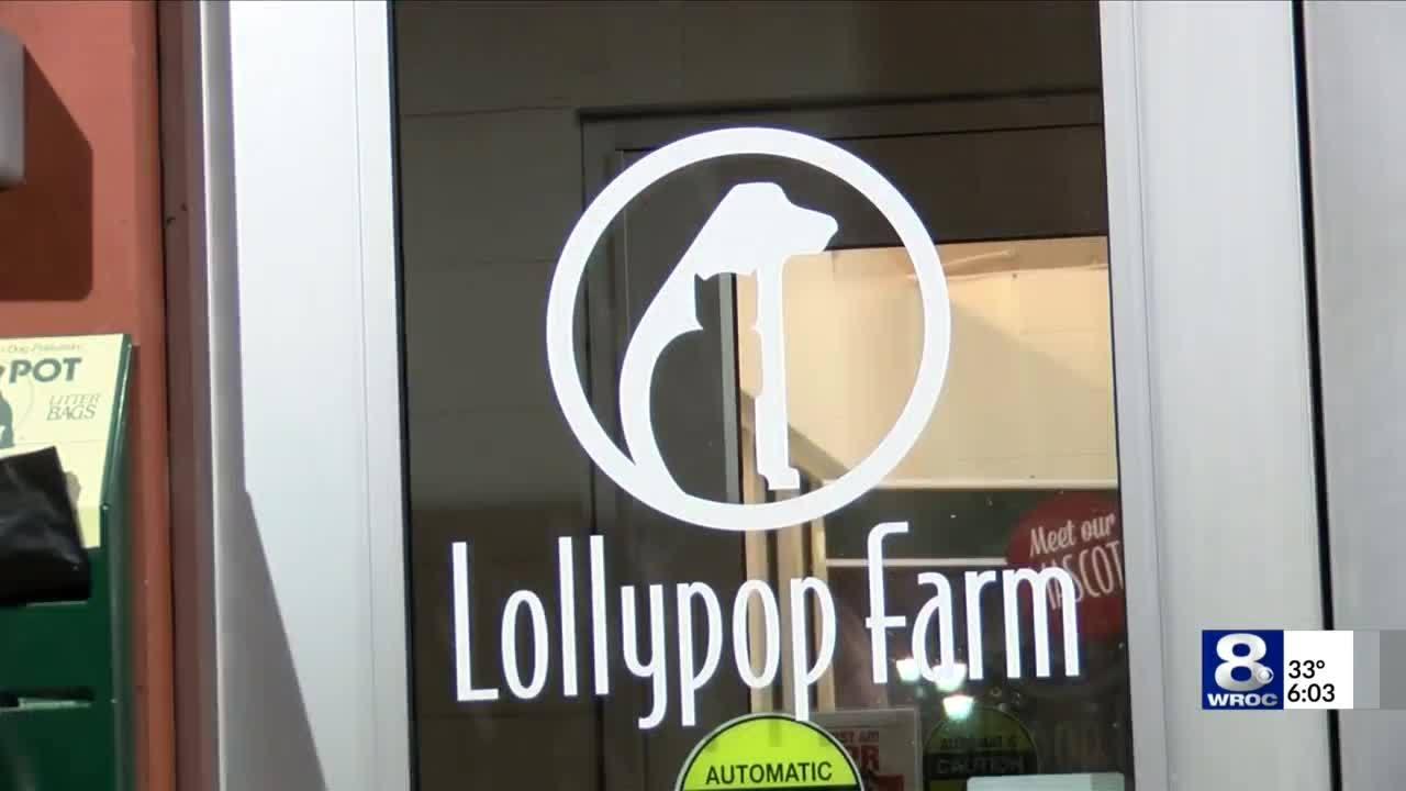 Lollypop Farm's spring adoption specials