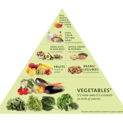New Food Pyramid Diagram 1987 Peterbilt 359 Wiring Nutrition 101 The Basics Of Healthy Eating Free Class
