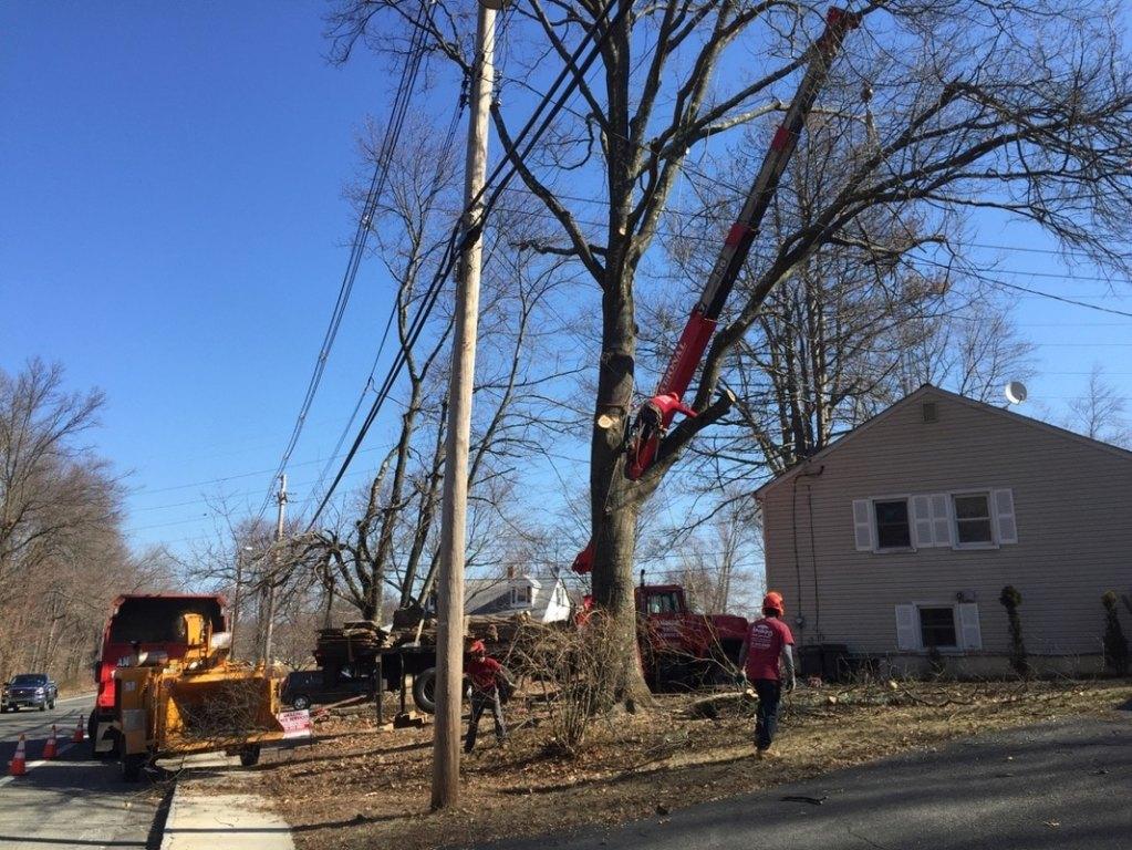Rockaway Tree Cutting