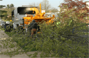 tree removal and haul off