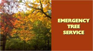 fallen tree for emergency service