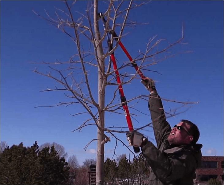 Tree Pruning Rockaway NJ