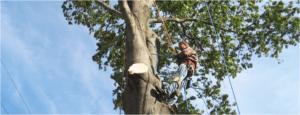 trimmed tree in rockaway nj