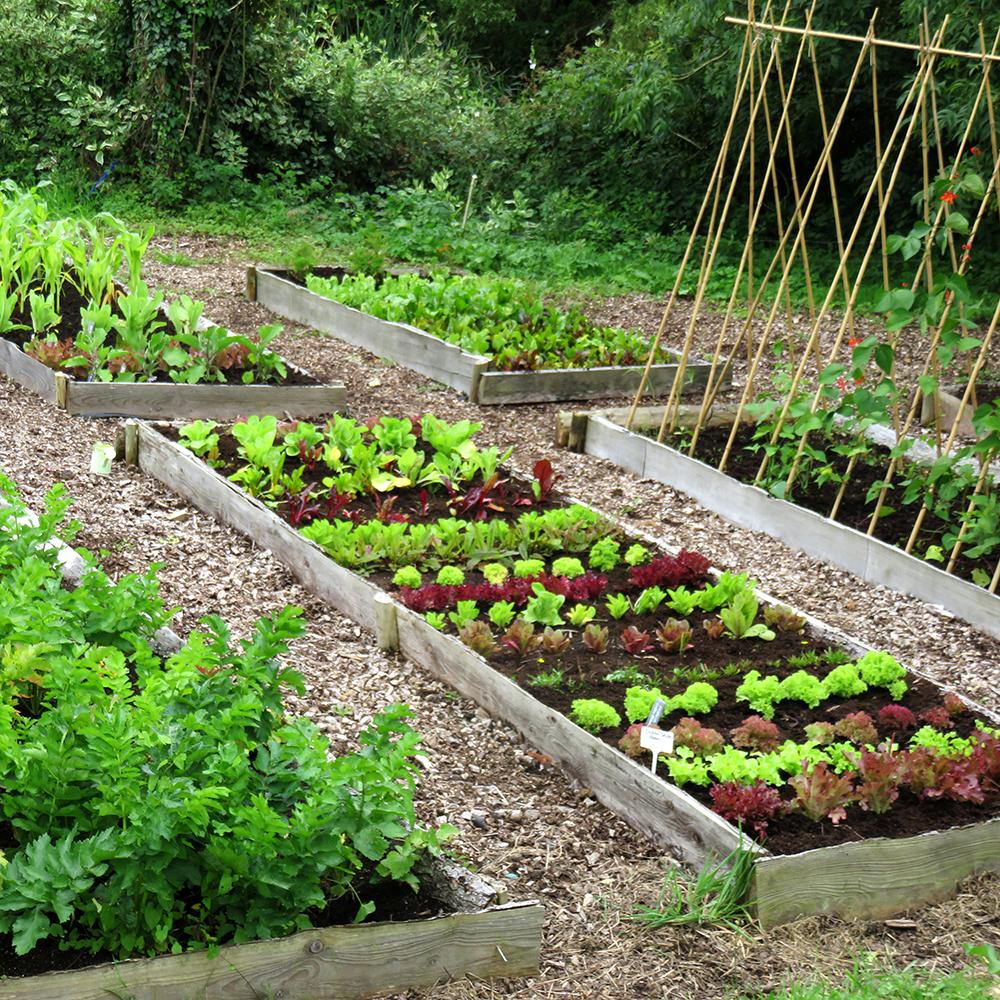 Small Vegetable Garden