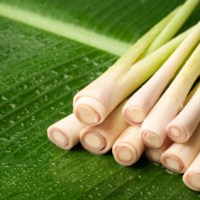essential oil lemongrass 2