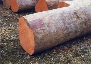 essential oil rosewood 2