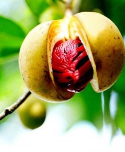 essential oil nutmeg fruit