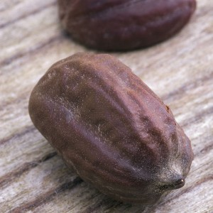 Jojoba Oil Seed