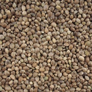 Hemp Seed Oil Seeds