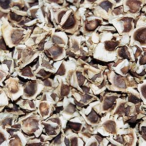 moringa oil seeds