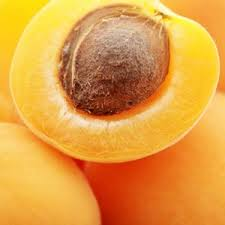 apricot oil seed