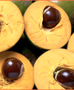 lucuma fruit
