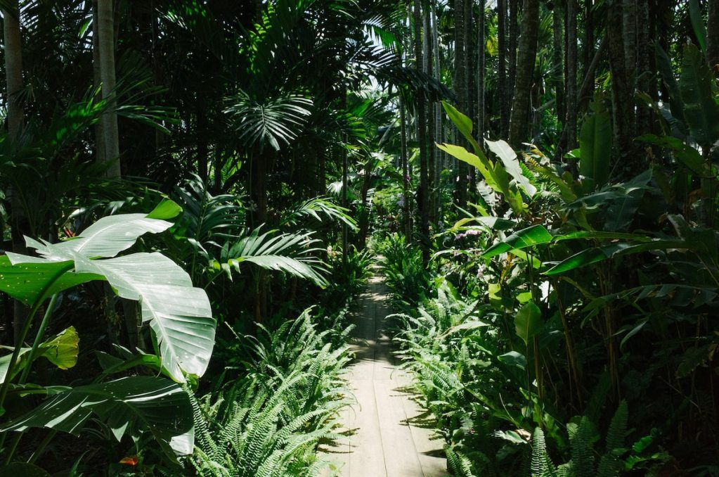 pic of path in the jungle