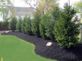 Awesome Fence With Evergreen Plants Landscaping Ideas 19