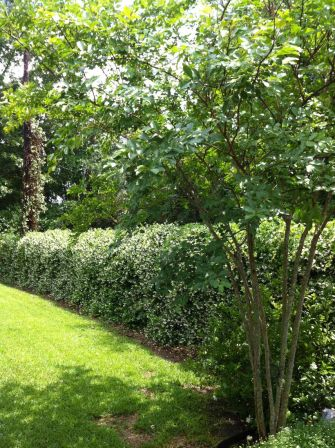Awesome Fence With Evergreen Plants Landscaping Ideas 44