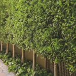 Awesome Fence With Evergreen Plants Landscaping Ideas 7