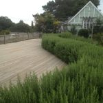 Awesome Fence With Evergreen Plants Landscaping Ideas 73