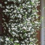 Awesome Fence With Evergreen Plants Landscaping Ideas 90