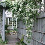 Awesome Fence With Evergreen Plants Landscaping Ideas 91