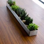 Beauty Succulents for Houseplant Indoor Decorations 32 1