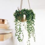 Beautiful Home Plant for Indoor Decorations 13