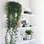Beautiful Home Plant for Indoor Decorations 22