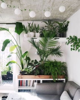 Beautiful Home Plant for Indoor Decorations 23