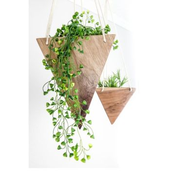 Beautiful Home Plant for Indoor Decorations 31