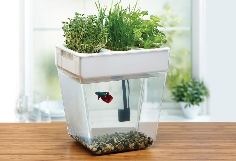 DIY Indoor Aquaponics Fish Tank Ideas 1