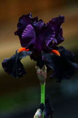 Spooky Plant and Flower Ideas to Make Perfect Goth Garden 13