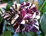Spooky Plant and Flower Ideas to Make Perfect Goth Garden 18
