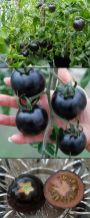 Spooky Plant and Flower Ideas to Make Perfect Goth Garden 3