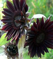 Spooky Plant and Flower Ideas to Make Perfect Goth Garden 30