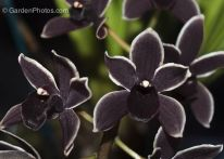 Spooky Plant and Flower Ideas to Make Perfect Goth Garden 40
