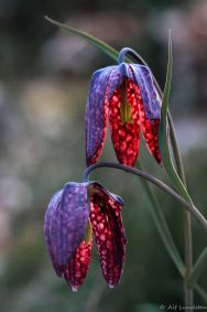 Spooky Plant and Flower Ideas to Make Perfect Goth Garden 48