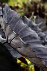 Spooky Plant and Flower Ideas to Make Perfect Goth Garden 57