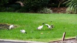 The Royal Botanic Garden