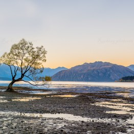 Wanaka tree is usually located in the lake but this time there was low water level