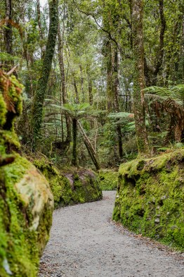 On the way to Lake Matheson
