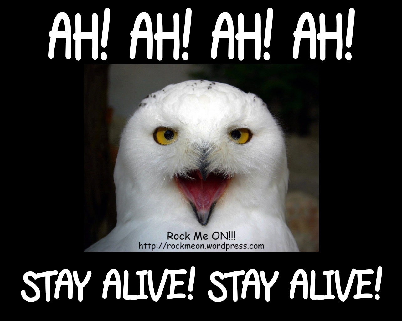 Ruja, A Coruja! Ruja, The Owl!