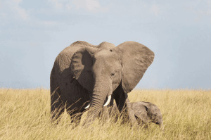 Kenya Group Tour for Solo Travellers