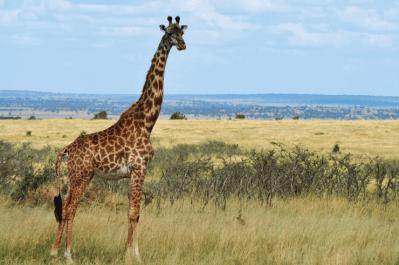 Kenya Tour 40